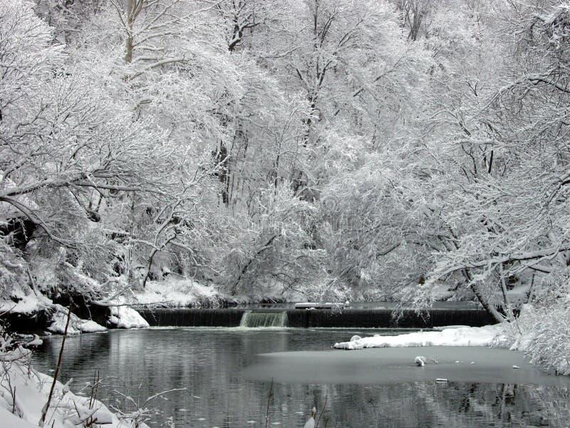 Winter-Wald stockbild