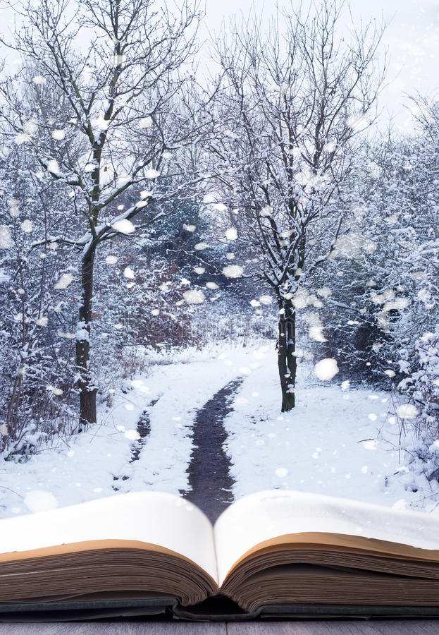 Winter-Waldbuch stockbilder