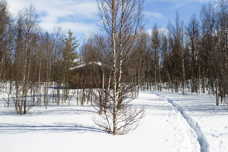 Winter-Waldkabine stockfoto
