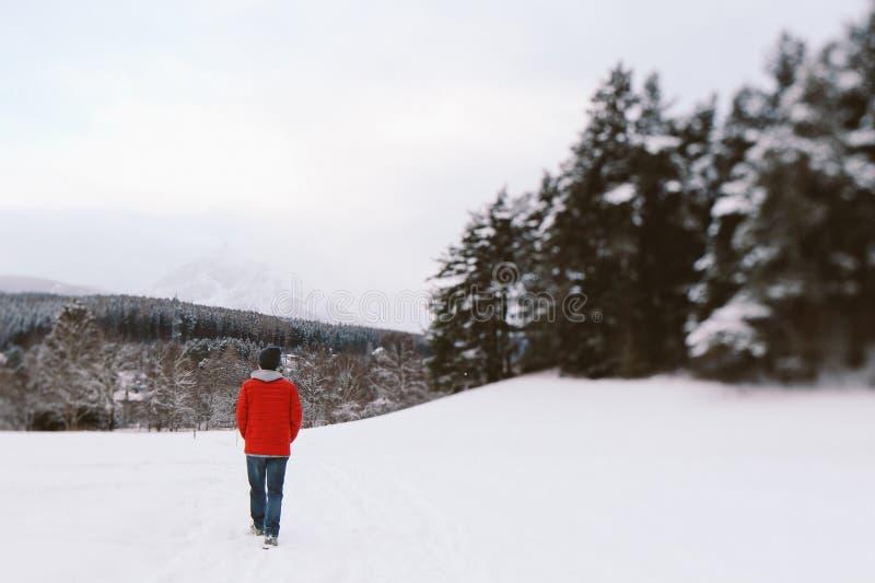 A Winter Walk. A lone wanderer walks in the winter landscape royalty free stock photo