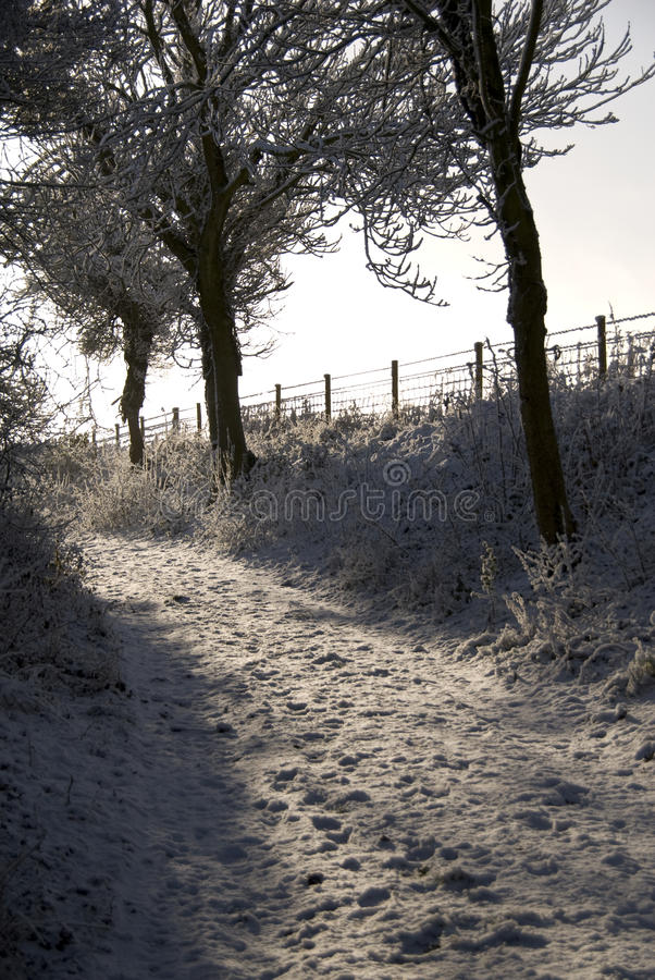 Winter walks in down a snow covered lane.