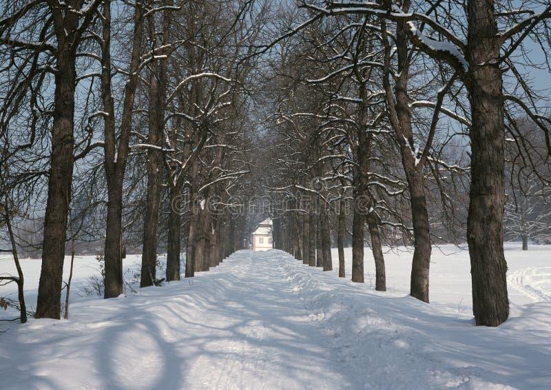 Download Winter way back stock photo. Image of natural, seasons - 19540354