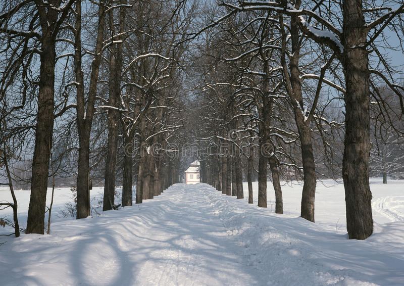 Winter way back