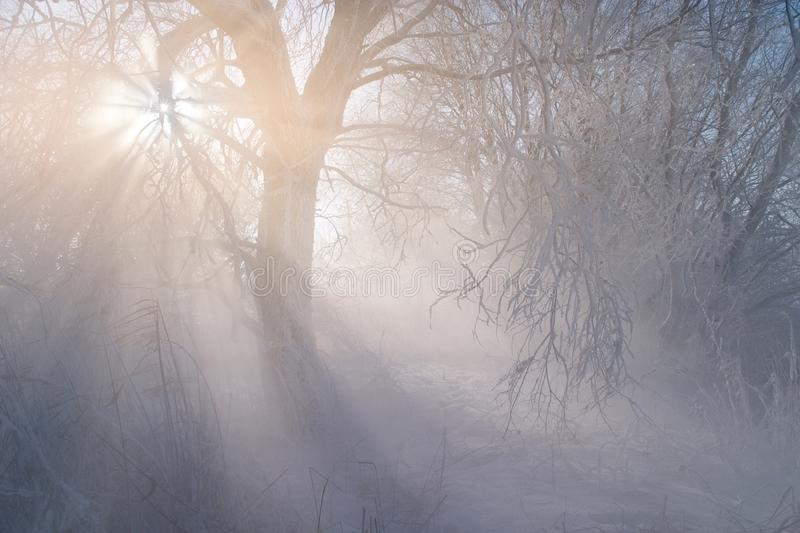 Winter weather phenomenon. Heavily full of wet air condenses on the surface of ice crystals. Morning sun rays shining through the royalty free stock images