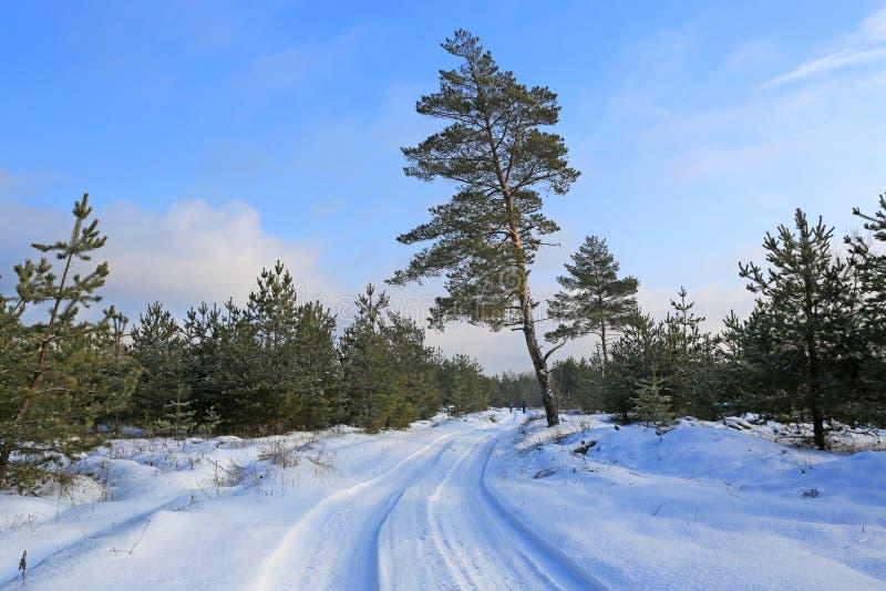 Winter-Weg im Wald lizenzfreie stockbilder