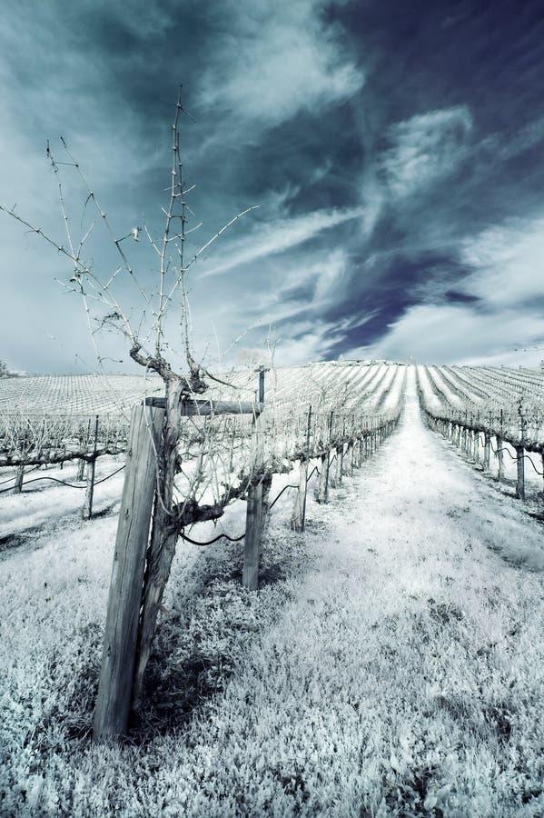 Winter-Weinberg im Infrarot stockfotos