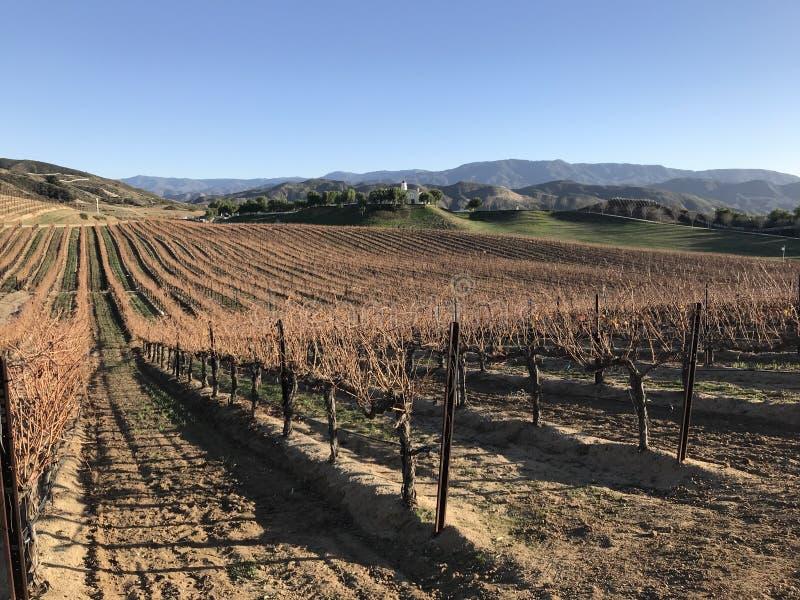 Winter-Weinreben lizenzfreies stockbild
