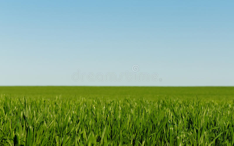 Download Winter Wheat Royalty Free Stock Images - Image: 13916659