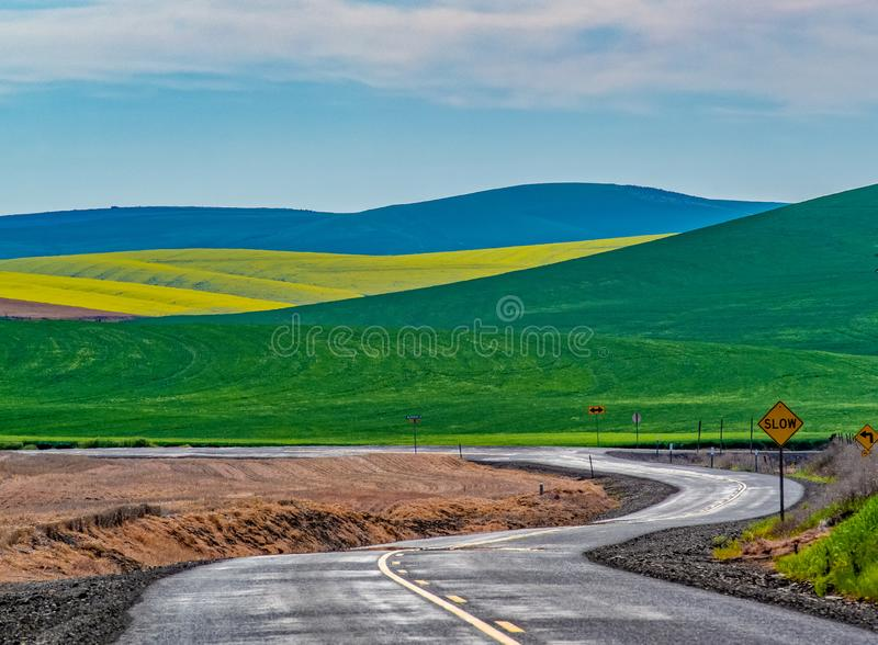 Winter Wheat and Canola Fields. Springtime brightens the landscape with fields of deep greens of winter wheat and bright yellow Canola in North Central Oregon stock image