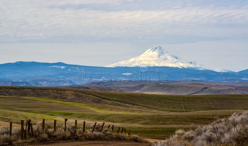 Winter Wheat and Mt Hood stock photos