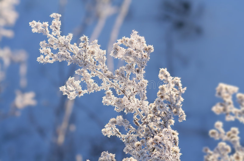Winter white. Snow and ice on last year's vegetation stock photos