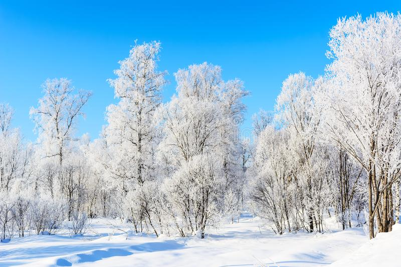 Winter white frozen trees landscape. Winter day landscape with white frozen trees and blue sky royalty free stock photography