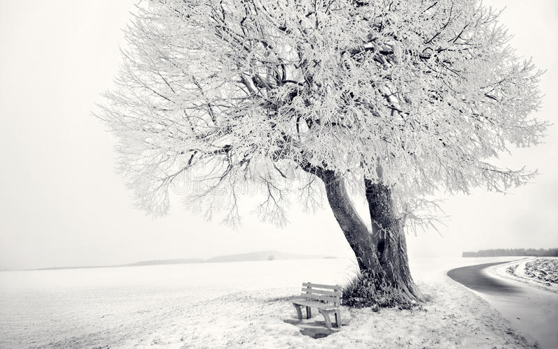 Winter White tree day chair royalty free stock images
