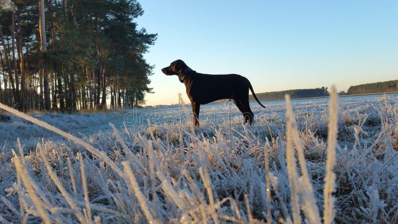 Winter Wiese stockbilder