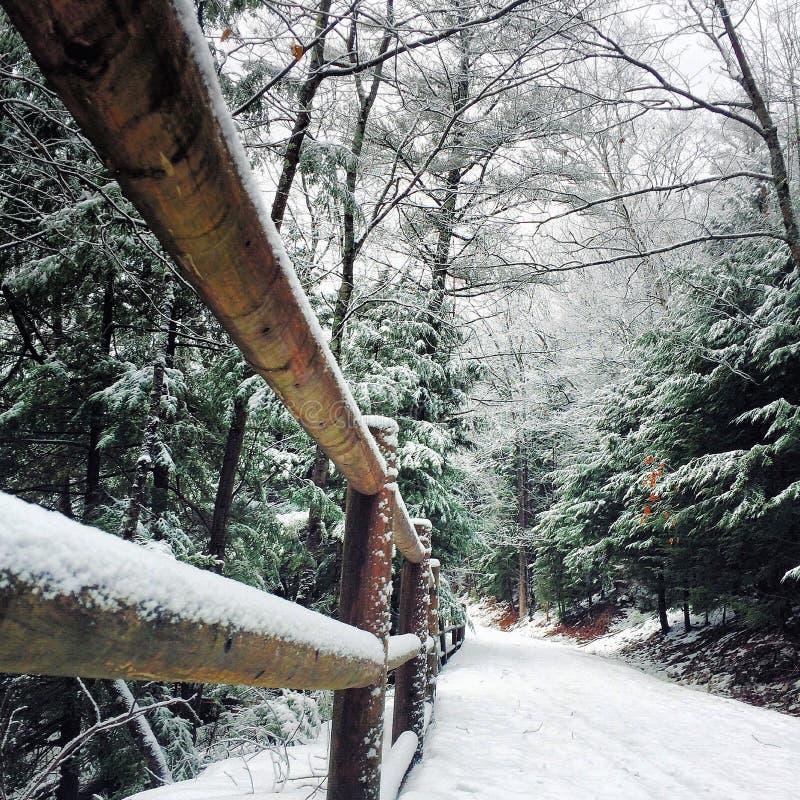 Winter wilderness walk stock photography