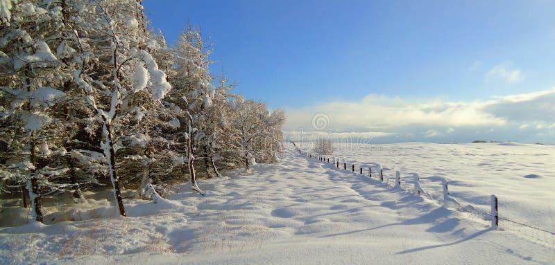 Download Winter wonder stock photo. Image of cold, christmas, landscape - 17261686