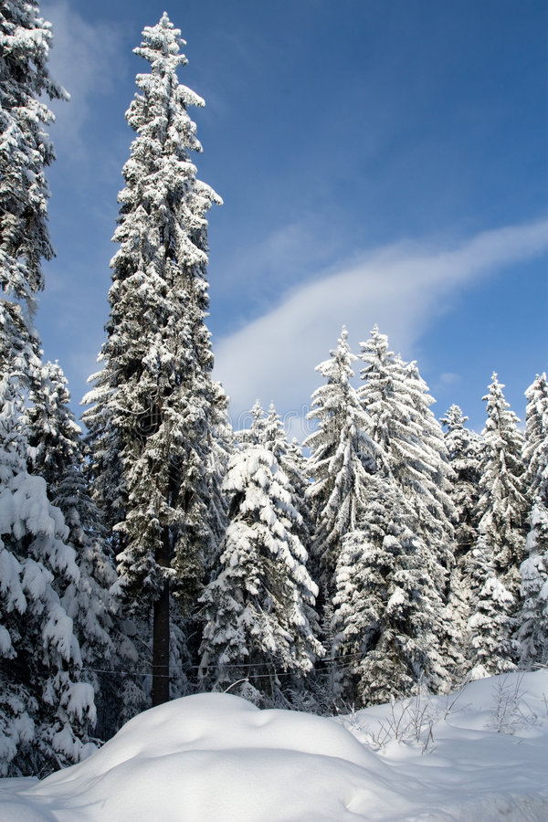 Download Winter wonder stock photo. Image of tree, winter, paradise - 6927674