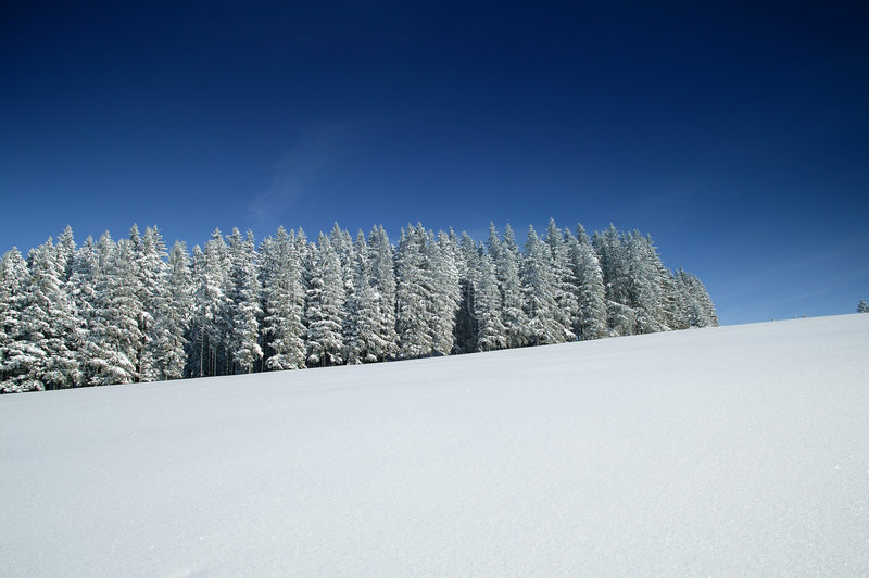 Download Winter wonder world stock image. Image of cold, forest, trees - 8293