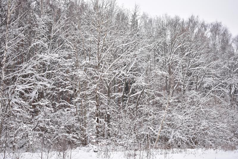 Winter is a wonderful time of the year. And especially nice in the winter in the woods stock image