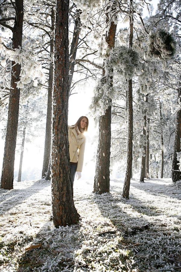 Free Winter Wonderland Stock Photo - 14377940
