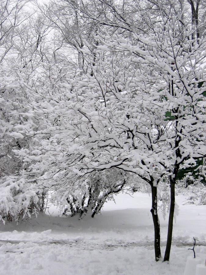 Download Winter Wonderland Royalty Free Stock Image - Image: 177556