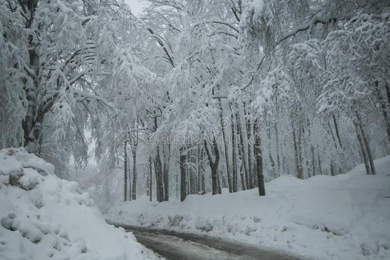 Winter wonderland: beautiful forest with many snow in mount Amiata, Tuscany. Italy, Europe royalty free stock images