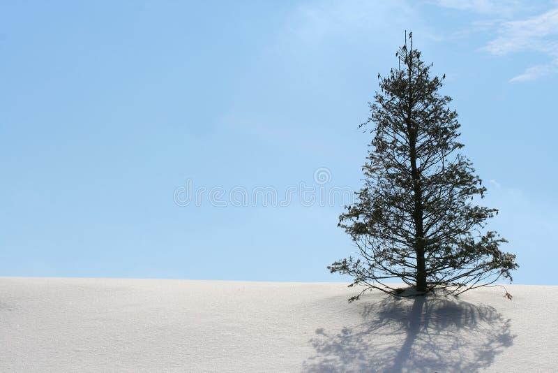 Winter wonderland with christmas tree stock image