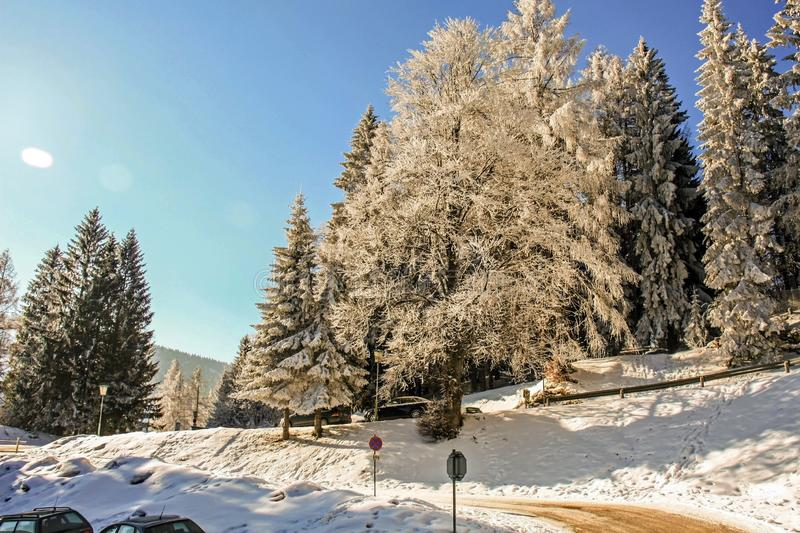 Winter wonderland mountain scenery with centuries-old spruce and pine in the austrian Alps during a bright sunny day in Winter tim stock photo