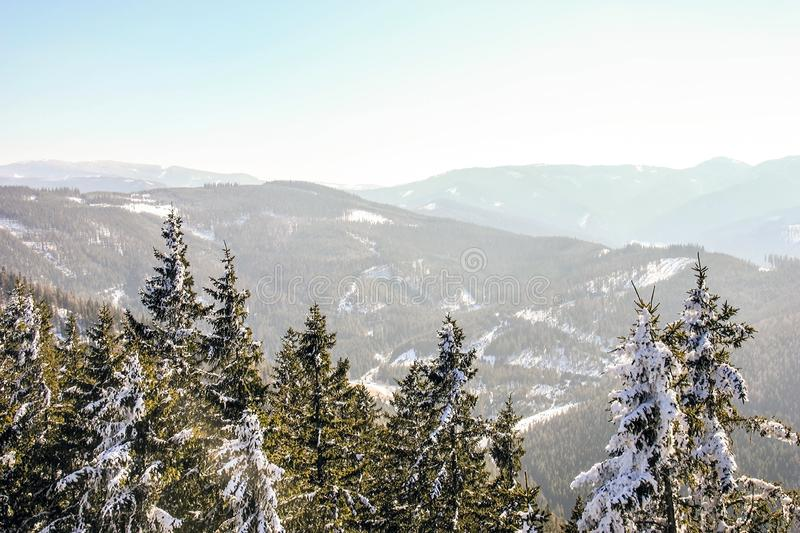 Winter wonderland mountain scenery with centuries-old spruce and pine in the austrian Alps during a bright sunny day in Winter tim royalty free stock photos
