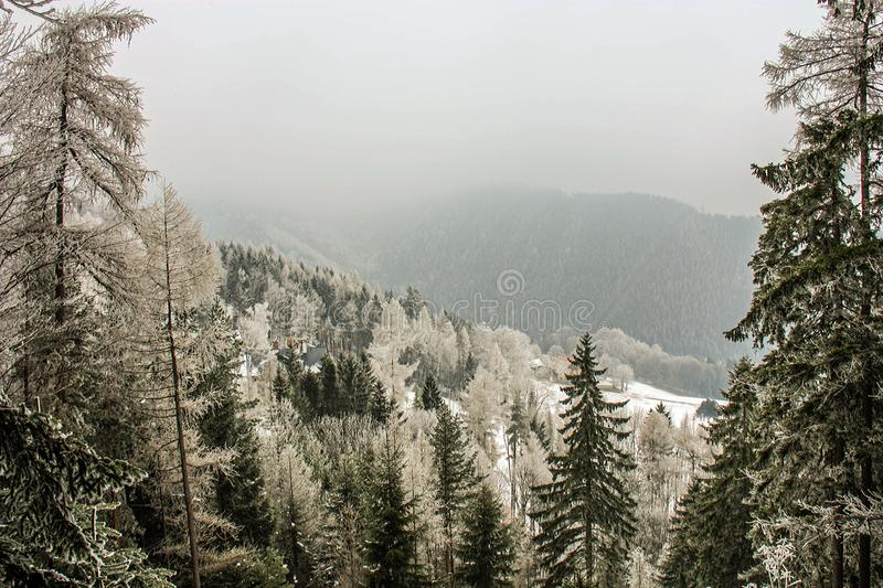 Winter wonderland mountain scenery with centuries-old spruce and pine in the austrian Alps. Mountain landscape of Semmering. royalty free stock photos