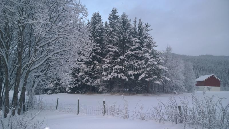 Winter wonderland. royalty free stock images