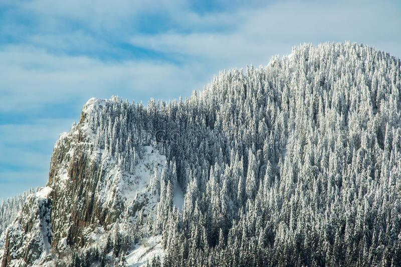 Winter wonderland with pine tree, forest, covered in snow, snowy scenery on blue sky with clouds. Winter wonderland, mountain peak with trees covered in snow royalty free stock photography