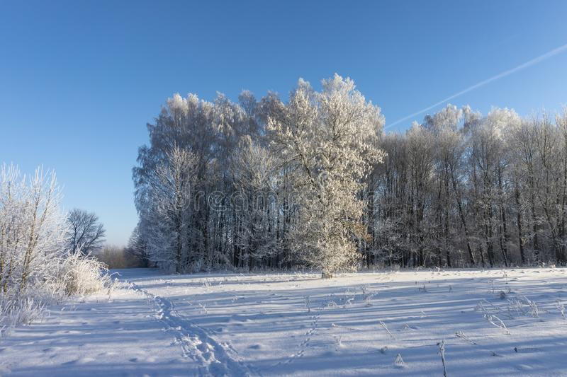 Winter wonderland with snow covered branches. On deciduous trees and blue sky stock photo