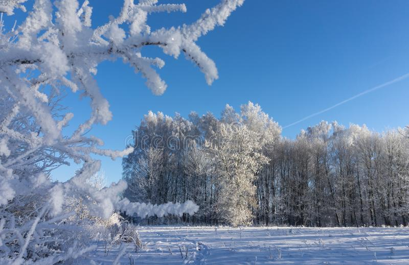 Winter wonderland with snow covered branches. On deciduous trees and blue sky royalty free stock image