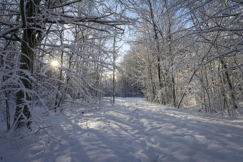 Winter wonderland with snow covered branches. On deciduous trees and a colorful dawn with soft pink clouds in a blue sky colored by the rising sun stock photo