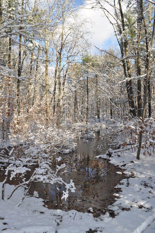 Winter wonderland royalty free stock photography