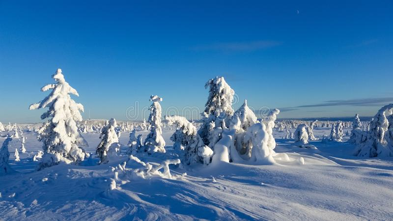 Winter wonderland . trees covered in snow. Winter wonderland. Trees covered in snow. Snowy winter landscape. Hedmark county Norway stock photo