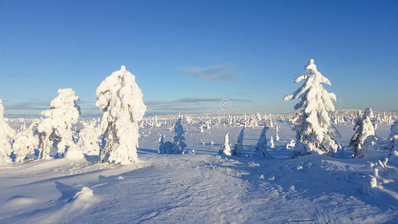Winter wonderland . trees covered in snow. Winter wonderland. Trees covered in snow. Snowy winter landscape. Hedmark county Norway stock photography