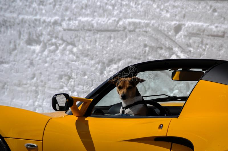 Snowwalls with yellow sportscar on the Hochalpenstrasse in spring royalty free stock photo