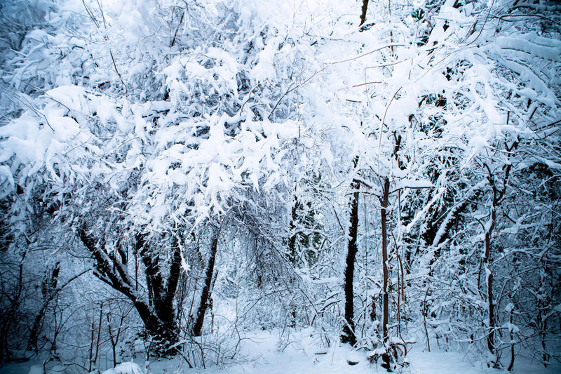 Download Winter wood stock photo. Image of white, scene, scenic - 18006482