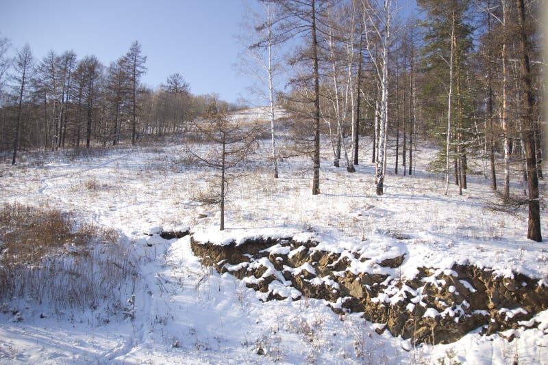 Winter wood royalty free stock photos