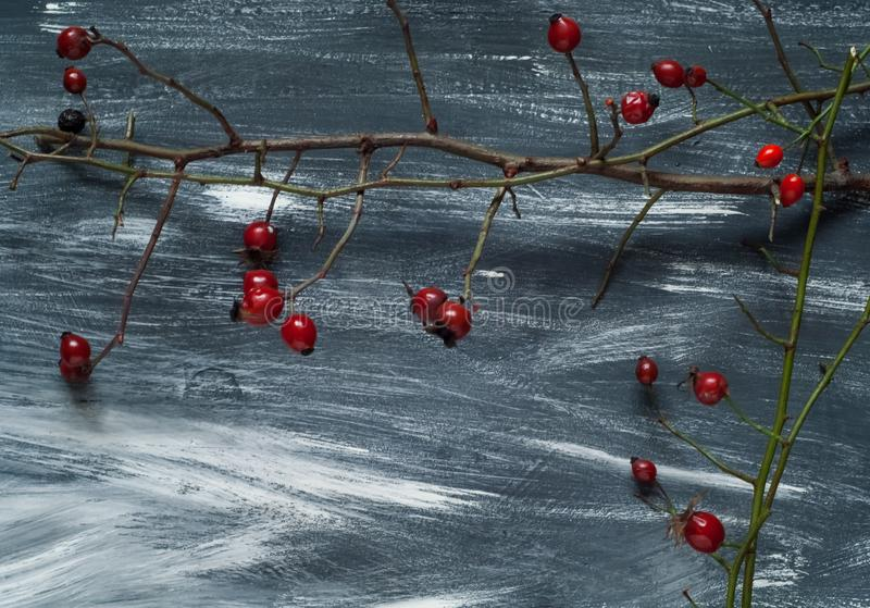 Winter wood blue and white background with a rose hip on a branch, natural light, top view stock image