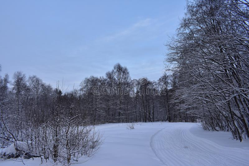 Winter wood, this dreamlike dream the road in the snow. Winter wood, this dreamlike dream. Wonderful Winter Forest. Walk through the winter forest. the road in stock image
