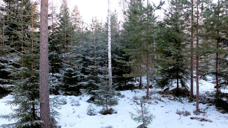 Download Winter Wood Stock Photo - Image: 83705269
