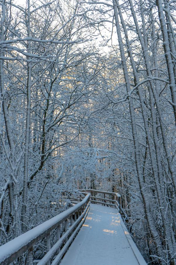 Winter wooden path bridge in swedish woods. Snowy day in scandinavian forest. Bright winter day. Nature wallpaper. Photo with tr stock images