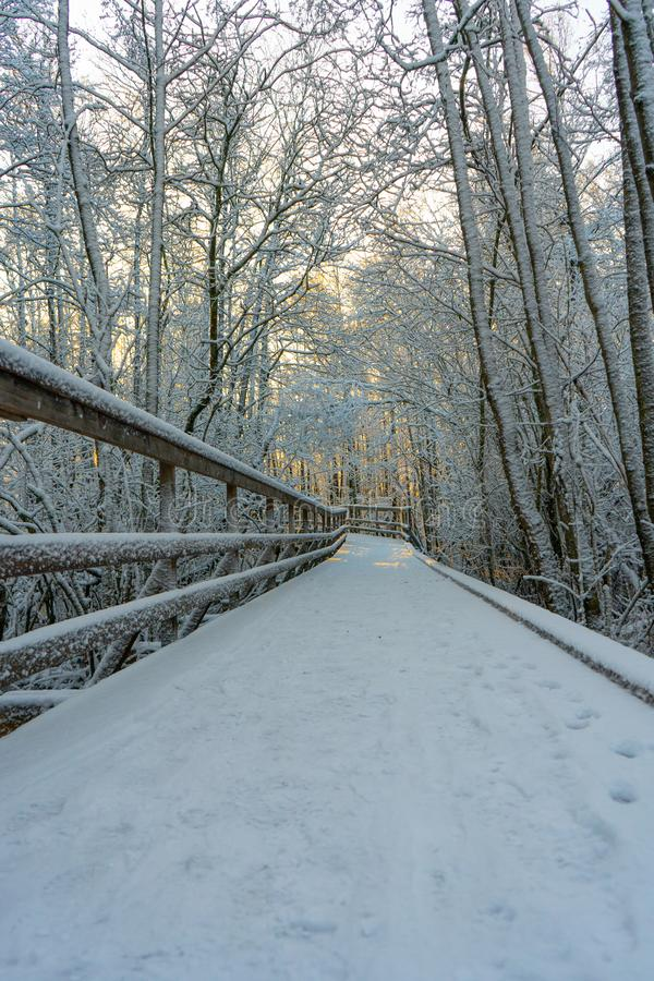 Winter wooden path bridge in swedish woods. Snowy day in scandinavian forest. Bright winter day. Nature wallpaper. Photo with tr royalty free stock photo
