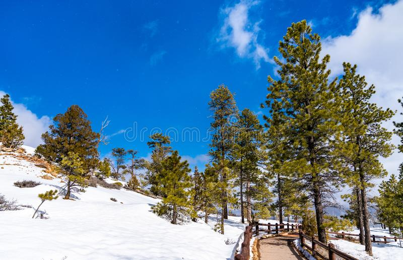 Winter woodland scenery at Bryce Canyon, the USA. Winter woodland scenery at Bryce Canyon - Utah, the United States stock photography