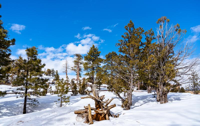Winter woodland scenery at Bryce Canyon, the USA. Winter woodland scenery at Bryce Canyon - Utah, the United States royalty free stock photography
