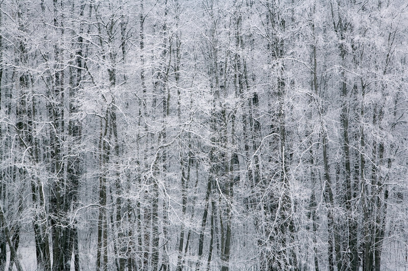 Download Winter by the woods 2 stock image. Image of depression - 3788565