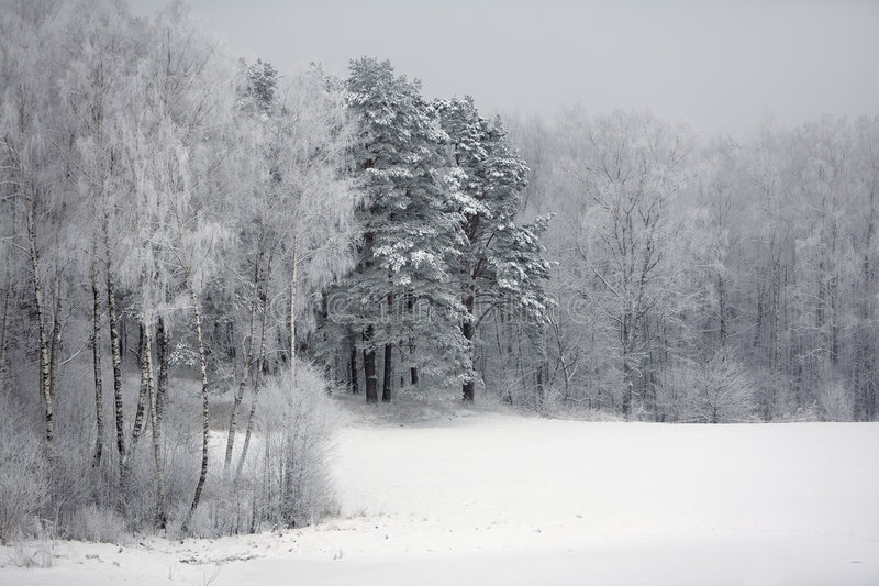 Download Winter by the woods stock photo. Image of winter, chill - 3788538